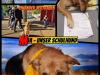 Unser-Schulhund